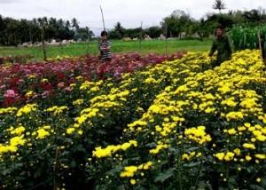 Hoa Cúc dễ sống lại có sức bền thường mang theo ước muốn sức khỏe, trường thọ...