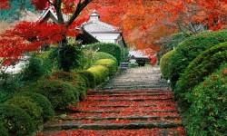 Du lịch nhật bản mùa lá đỏ 6 ngày 5 đêm