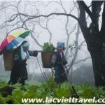 Du lịch Sapa thị trán mờ sương.
