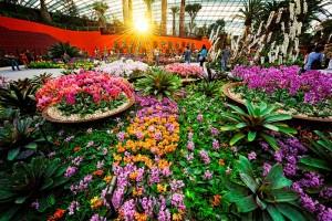 Du lịch Singapore - Tham quan Flower Dome