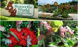 du lịch thái lan-vườn bướm thái lan