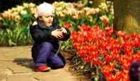 Du lịch châu Âu- lễ hội hoa tulip