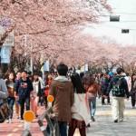 Du lịch Hàn Quốc 05 ngày tháng 03