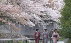 Du lịch Nhật Bản 06 ngày tháng 04