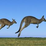 Du lịch Úc 07 ngày