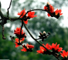 Hoa đẹp Hà Nội