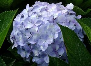 Du lịch Nhật Bảnf 05 ngày thiên đương hoa