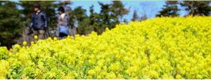 Du lịch Nhật Bản 05 ngày thiên đường hoa