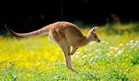 Du lịch Úc 07 ngày hè 2015