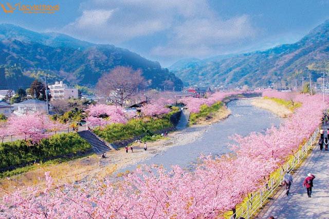 Du lịch Nhật Bản – ngôi làng rực hồng sắc hoa anh đào