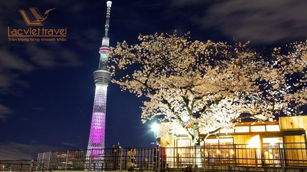 Tháp Tokyo Tree