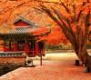 du lịch hàn Quốc mùa lá đỏ
