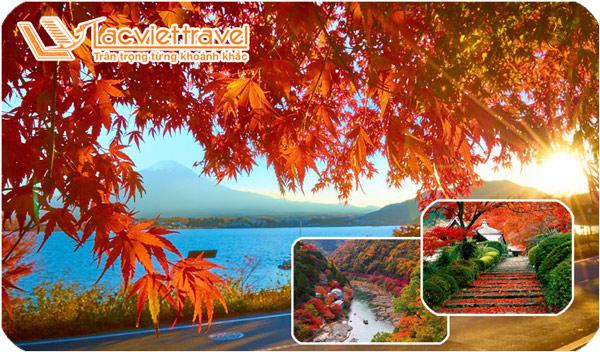 Lạc lối trước cảnh đẹp và lễ hội mùa thu trong tour du lịch Nhật Bản