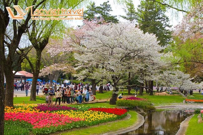 Ngất ngây ngắm bầu trời hoa tại Showa Kinen Park
