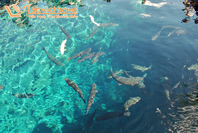 Làng cổ Oshino Hakkai – nơi xả stress lý tưởng trong chuyến du lịch Nhật Bản mùa hè