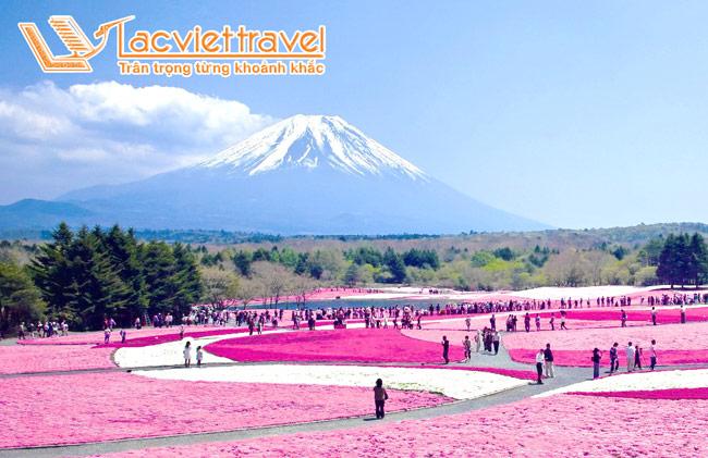"""Ngắm hoa Chi Anh ngọt ngào trong """"lễ hội hoa Shibazakura""""  trong chuyến du lịch Nhật Bản"""