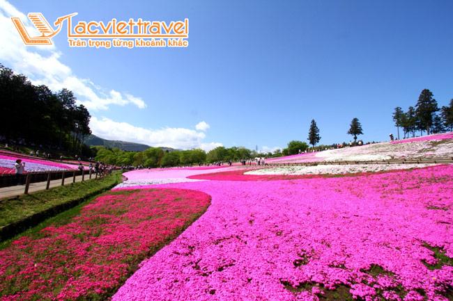 Hoa chi anh - du lịch Nhật Bản giá rẻ