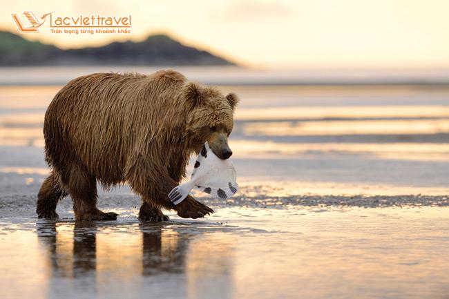 trung tâm bảo tồn động vật hoang dã Alaska