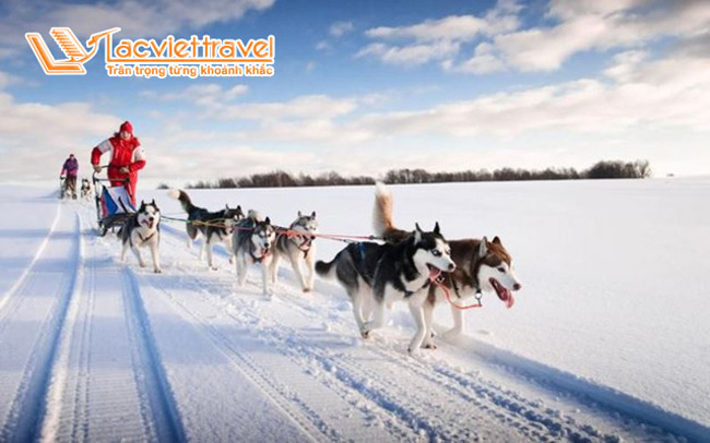 xe chó kéo Alaska