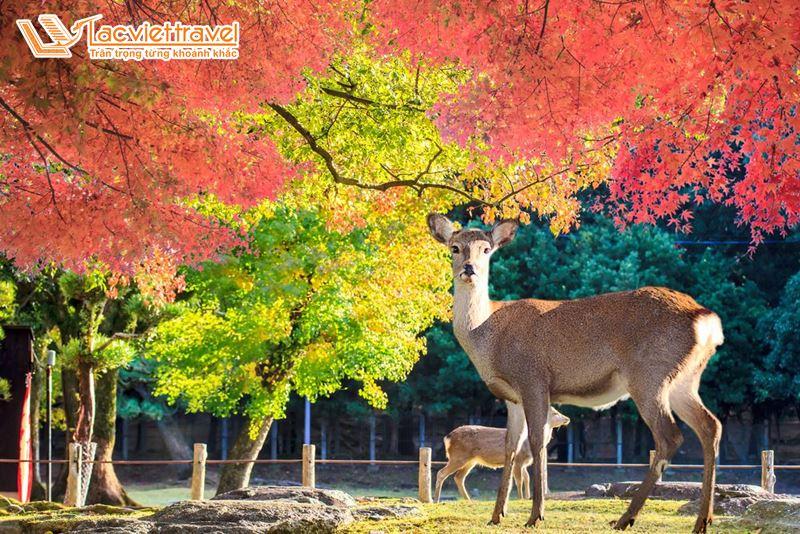 Du lịch Nhật Bản tết dương lịch - Công viên Nara