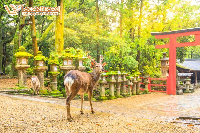 Du lịch Nhật Bản Tết Nguyên Đán
