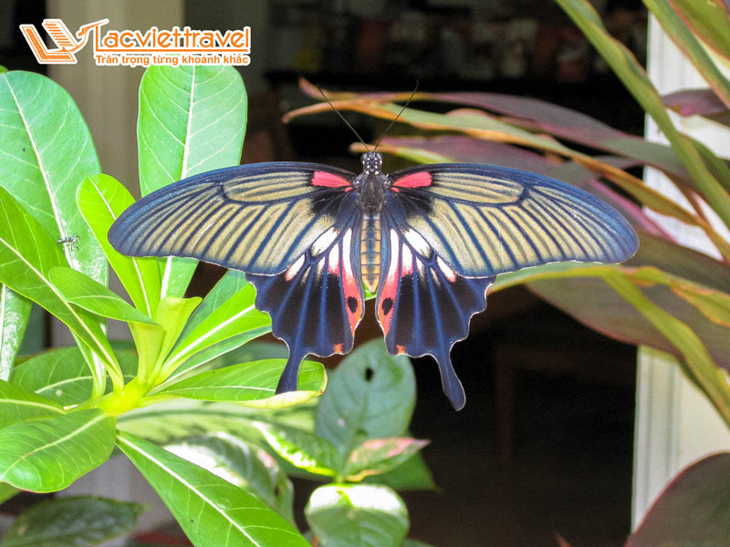 Vườn bướm Butterfly Garden - Thái Lan