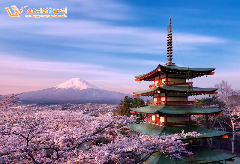 Thăm Chureito ngắm Phú  Sĩ mùa anh đào
