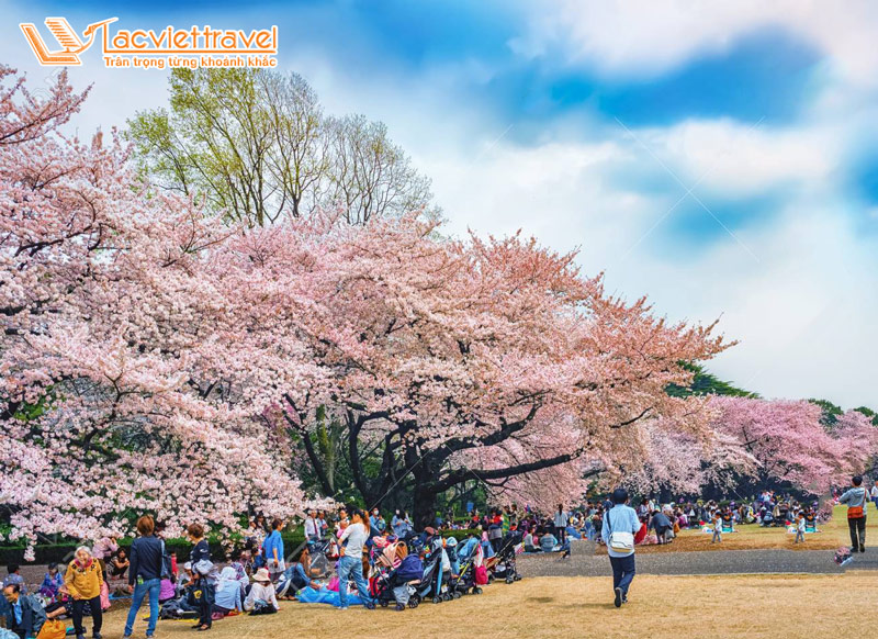 Công viên Shinjuku tháng 3