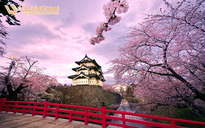 Lâu đài Hirosaki mùa anh đào nở