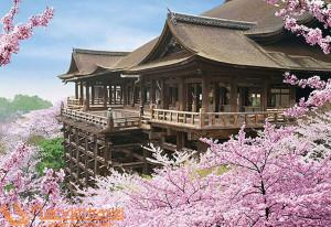 tokyo-kawaguchiko-nagoya-kyoto-nara-osaka-ngam-hoa-anh-dao